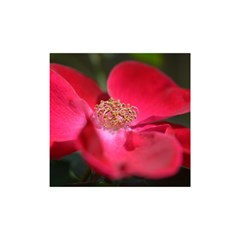 Bright Red Rose Shower Curtain 48  X 72  (small)