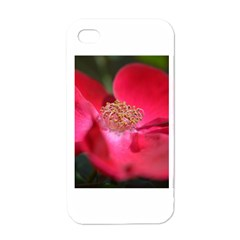 Bright Red Rose Apple Iphone 4 Case (white)