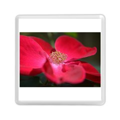 Bright Red Rose Memory Card Reader (Square)