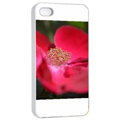 Bright Red Rose Apple iPhone 4/4s Seamless Case (White)
