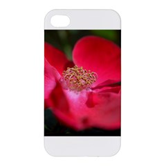 Bright Red Rose Apple Iphone 4/4s Hardshell Case