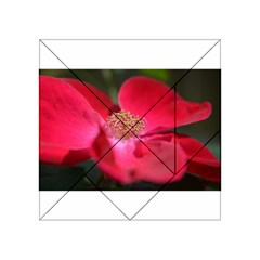 Bright Red Rose Acrylic Tangram Puzzle (4  x 4 )