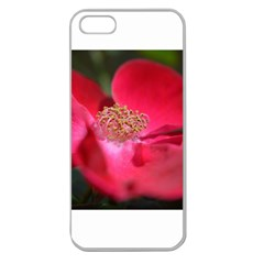 Bright Red Rose Apple Seamless Iphone 5 Case (clear)