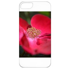 Bright Red Rose Apple Iphone 5 Classic Hardshell Case