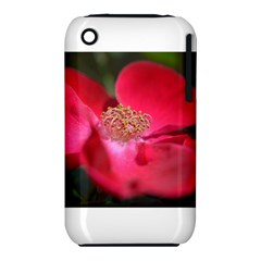 Bright Red Rose Apple Iphone 3g/3gs Hardshell Case (pc+silicone)