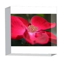 Bright Red Rose 5  x 5  Acrylic Photo Blocks