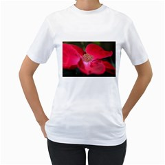 Bright Red Rose Women s T Shirt (white)