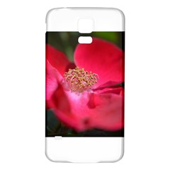 Bright Red Rose Samsung Galaxy S5 Back Case (white)