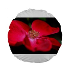 Bright Red Rose Standard 15  Premium Flano Round Cushions