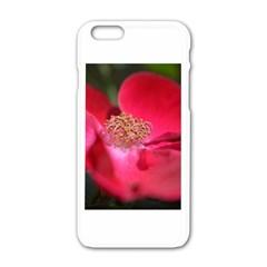 Bright Red Rose Apple iPhone 6 White Enamel Case
