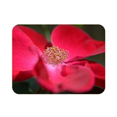 Bright Red Rose Double Sided Flano Blanket (Mini)