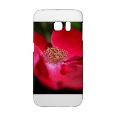Bright Red Rose Galaxy S6 Edge