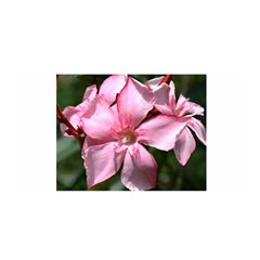 Pink Oleander Satin Wrap