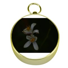 Lemon Blossom Gold Compasses