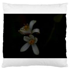 Lemon Blossom Large Flano Cushion Cases (Two Sides)