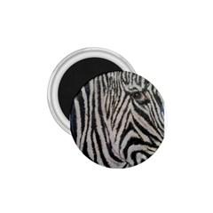 Unique Zebra Design 1 75  Magnets