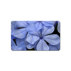 Bright Blue Flowers Magnet (name Card)