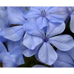 Bright Blue Flowers Magic Photo Cubes