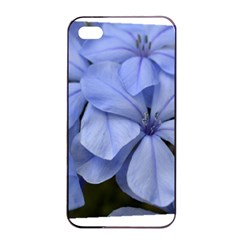 Bright Blue Flowers Apple iPhone 4/4s Seamless Case (Black)
