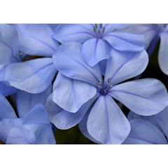 Bright Blue Flowers Birthday Cake 3D Greeting Card (7x5)