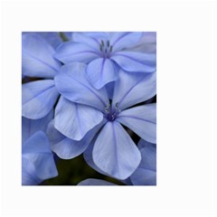 Bright Blue Flowers Small Garden Flag (two Sides)