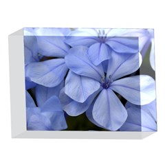 Bright Blue Flowers 5 x 7  Acrylic Photo Blocks
