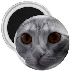 Funny Cat 3  Magnets