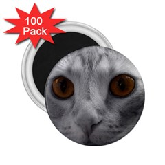 Funny Cat 2 25  Magnets (100 Pack)
