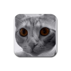 Funny Cat Rubber Square Coaster (4 Pack)
