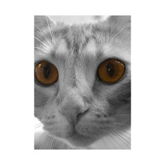 Funny Cat Shower Curtain 48  X 72  (small)
