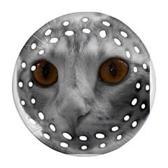 Funny Cat Ornament (round Filigree)