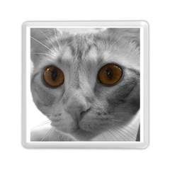 Funny Cat Memory Card Reader (Square)