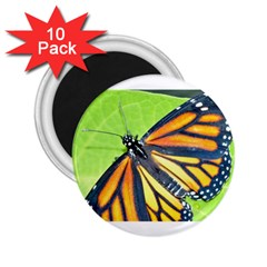 Butterfly 2 2 25  Magnets (10 Pack)