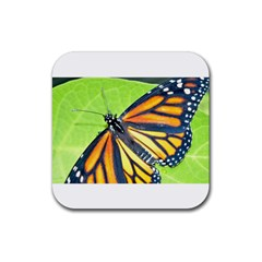 Butterfly 2 Rubber Square Coaster (4 Pack)