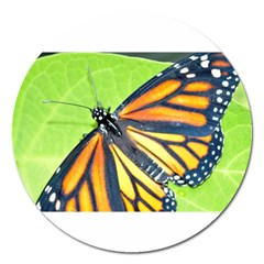 Butterfly 2 Magnet 5  (round)