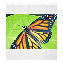 Butterfly 2 Shower Curtain 66  x 72  (Large)