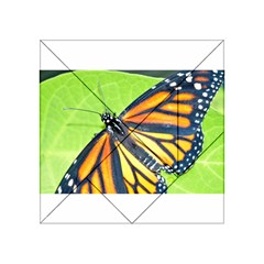 Butterfly 2 Acrylic Tangram Puzzle (4  x 4 )