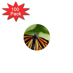Butterfly 3 1  Mini Magnets (100 Pack)