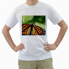 Butterfly 3 Men s T Shirt (white) (two Sided)