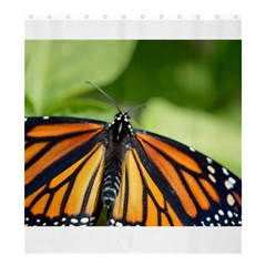 Butterfly 3 Shower Curtain 66  x 72  (Large)