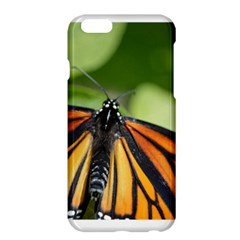 Butterfly 3 Apple Iphone 6 Plus Hardshell Case