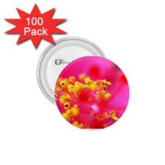 Bright Pink Hibiscus 1 75  Buttons (100 Pack)