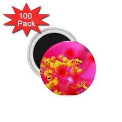 Bright Pink Hibiscus 1 75  Magnets (100 Pack)
