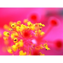 Bright Pink Hibiscus Magic Photo Cubes
