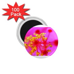 Bright Pink Hibiscus 2 1 75  Magnets (100 Pack)