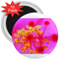 Bright Pink Hibiscus 2 3  Magnets (10 Pack)