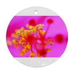 Bright Pink Hibiscus 2 Round Ornament (two Sides)