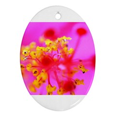 Bright Pink Hibiscus 2 Oval Ornament (two Sides)