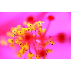 Bright Pink Hibiscus 2 Magic Photo Cubes