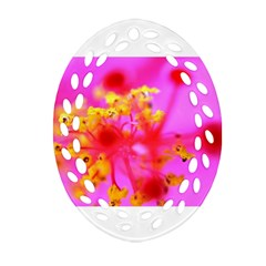 Bright Pink Hibiscus 2 Oval Filigree Ornament (2 Side)